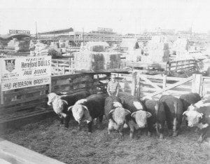 1952_NWSS_Carload_Bulls_Johns_dad_Paul